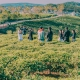 4 best wine tasting tours while traveling