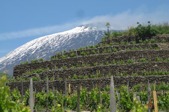 catar vinos cata de vinos en sicilia