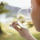 fases de una cata -bebiendo vino